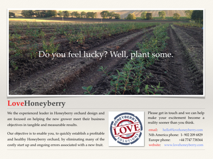 great Honeyberry orchard