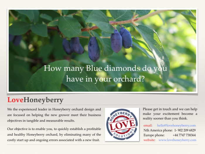 Honeyberry orchard planing