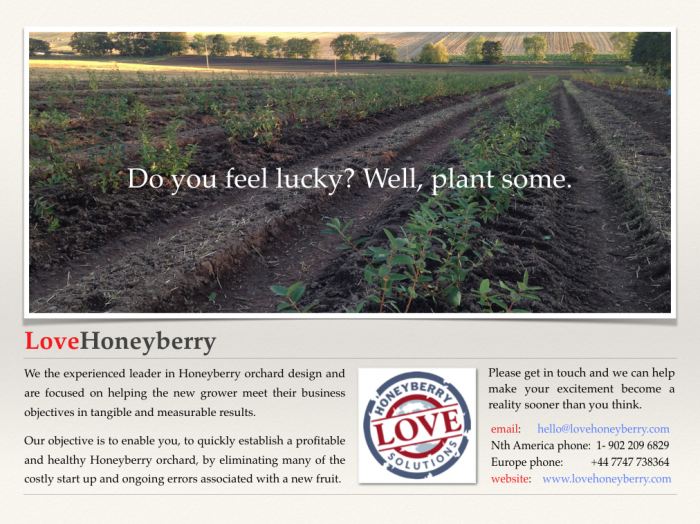 Honeyberry Guide
