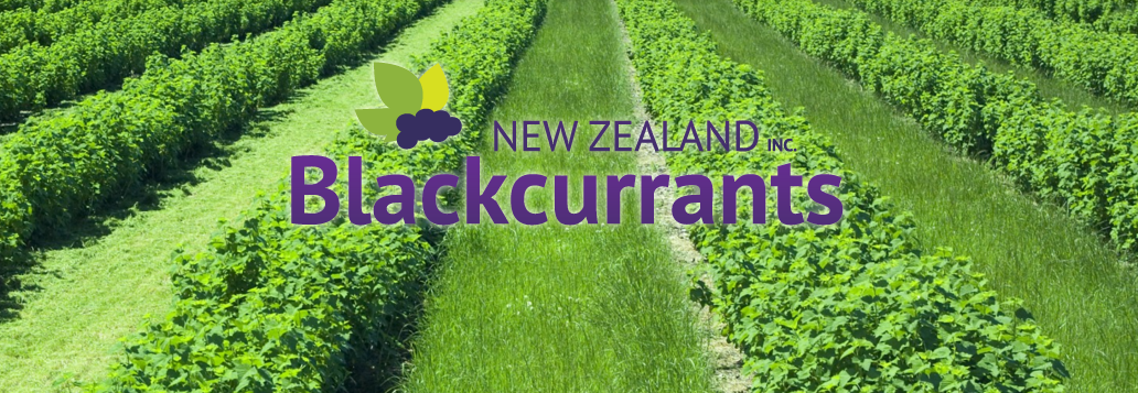 NZ Blackcurrants