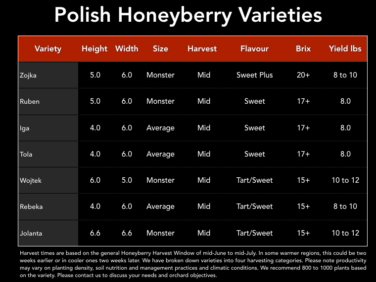 Łukaszewska Polish Honeyberries - Love Honeyberry